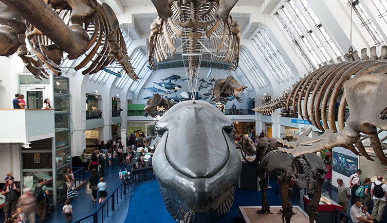 Mammals (blue whale) gallery at the Natural History Museum