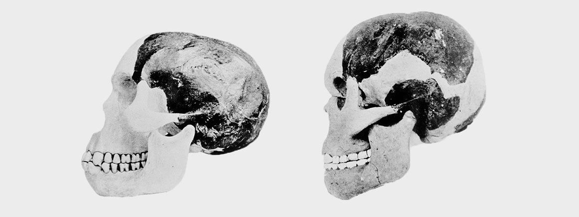Piltdown Man, Natural History Museum