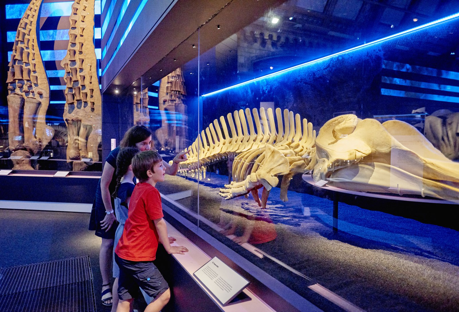 Whales: Beneath the Surface, Natural History Museum, South Kensington